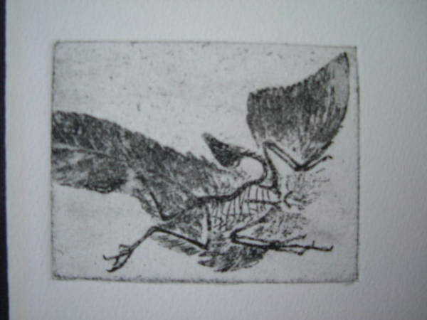 archaeopteryx_3x4_etching