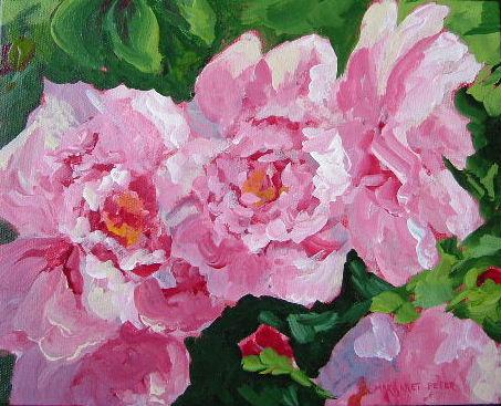 shrub_roses
