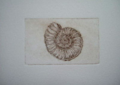 ammonite_2x3_etching
