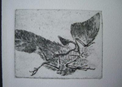 archaeopteryx_3x4_etching