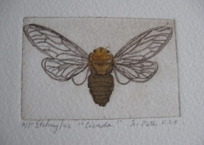 cicada__etching_on_paper__2x3