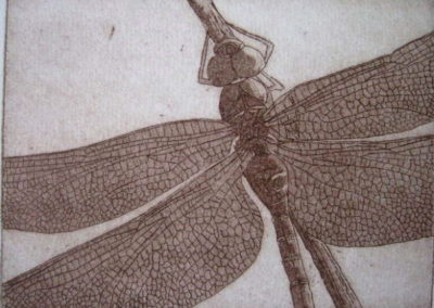 dragonfly_etching_6x8_matted14x16__85