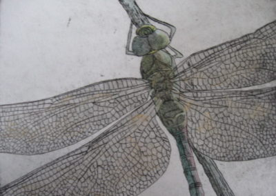 dragonfly_etching_with_watercolor_on_paper_6x8
