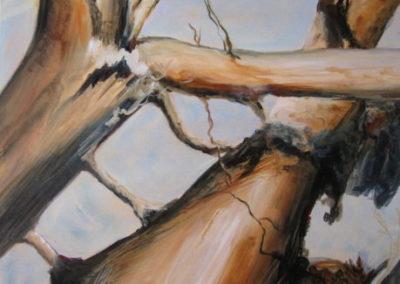 tree_series__2_acrylic_on_canvas_24x24